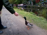 A friend I met on the canal.