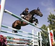 Horses Galore!!!