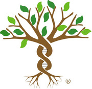 Sorenson Molecular Genealogy Foundation