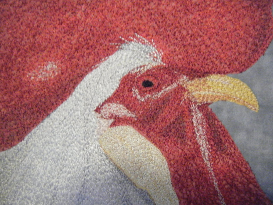 White rooster close up