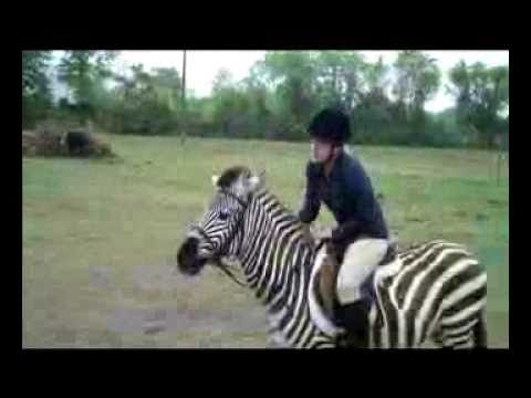 Jumping Zebra:  Zack the Zebra
