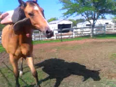 Horse Chiro Like You've Never Seen Before