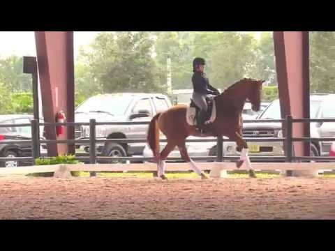 Steffen Peters: Establishing A Kinder More Gentle Contact in the Changes