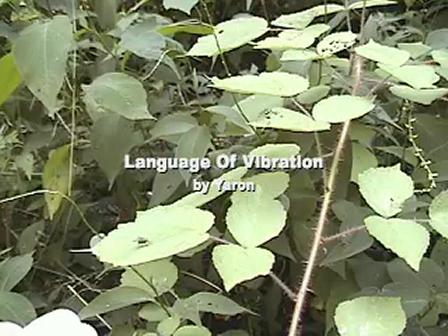 Language of Vibration