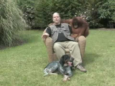 Suryia the Orangutan and Roscoe the Dog- Friends at First Sight