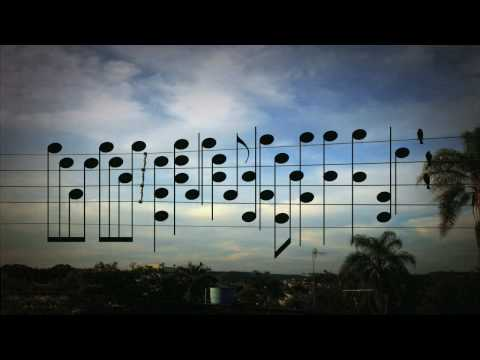 When Birds On The Wires Become Music