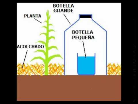 AGRO20: Técnica de Riego Solar por Goteo [ 1 Litro de Agua por Mes para una planta ]