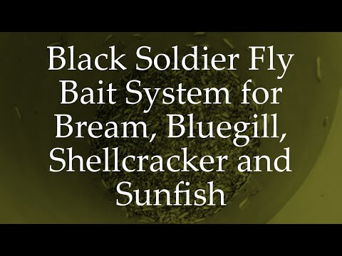 Black Soldier Fly Bait System