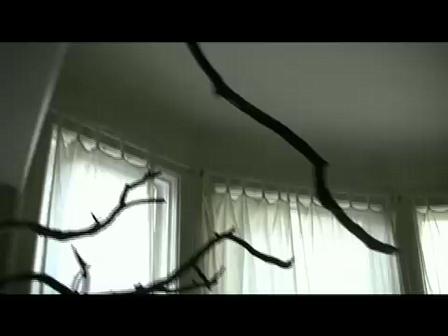 My Xmas Tree 2008
