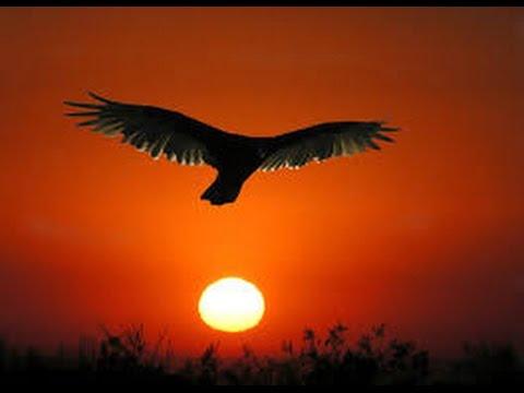 Majestuoso vuelo del Condor