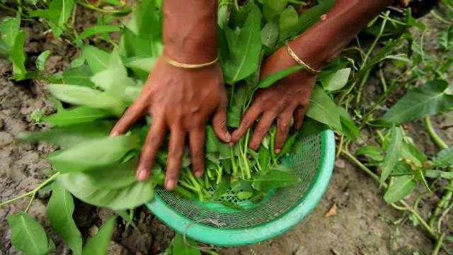 Empowering Women through Homestead Food Production