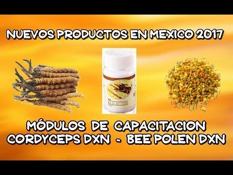Cordyceps DXN y Bee Polen DXN | Módulos de Capacitación