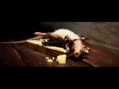 Nolan's Cheddar Commercial Mouse