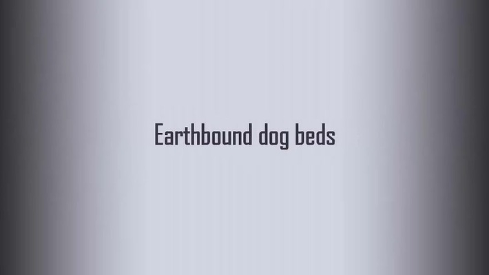 Just How To Select The Most Effective Canine Bed For Your Dog