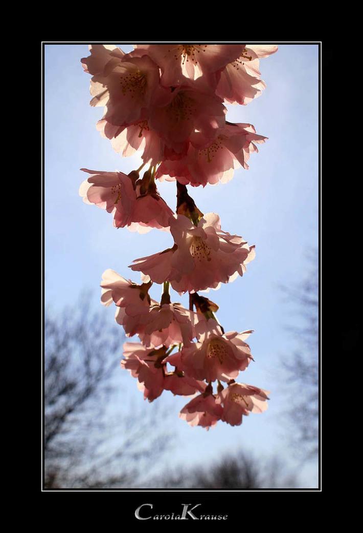 Herbal Easter Bells