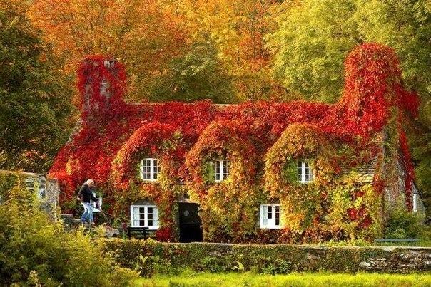 სახლი, კარი, ჭიშკარი, ეზო, შემოსასვლელი, წინდა, ჭიქა, ოცნება, ნატვრა, სალომეს ოცნებები, ბალუკას სურვილები, Qwelly, blog, dreams