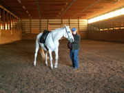 Mini - Clinic Series - In Hand work and Lunging