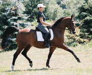 Dressage Clinic with Elaine Potter