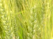 Jornada sobre el Seguro Creciente de Cultivos Herbáceos Extensivos