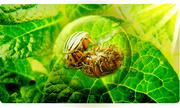 Workshop Virtual sobre Control de Plagas y Enfermedades en la Huerta Orgánica Familiar