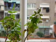 Curso a Distancia   Agricultura Urbana