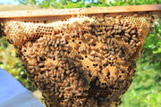 An Invitation to the inargual NZ Natural Beekeeping Conference