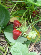 Permaculture Garden Tours at the Sunnyland Stomp