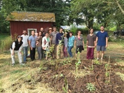 Food Forest & Permaculture Guild Plants