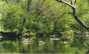 Young Adult Hike at the Wissahickon