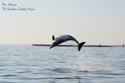 Studying the Desert Dolphins: Namibian Dolphin Project Internship