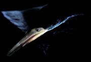 tight beak