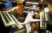 Keyboard Cat shows how to REALLY do it