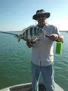 sheepshead on fly 2012