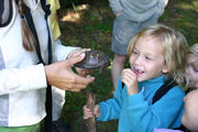Girl looking at a box turtle.