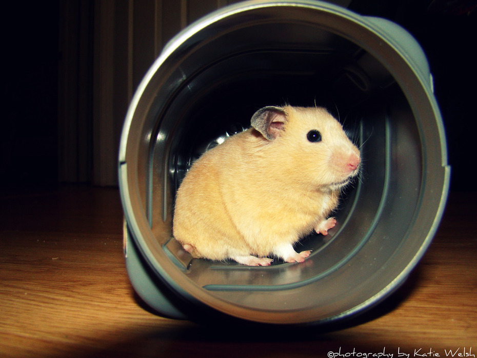 Hamster in the Tunnel
