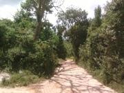 Ibitipoca - estrada que leva ao Parque