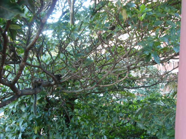 Árvore cheia de micos.