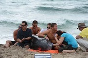 Stranded Whale — Delray Beach, Aug. 28