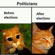 Before and After Election