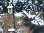 ZACK checking out the bird feast