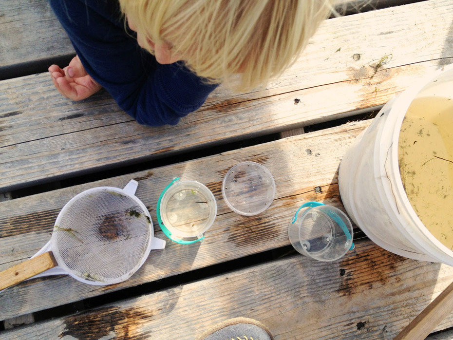 TP marsh dipping containers