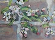 Apple Blossom.  Festina Lente.  9th April 2017