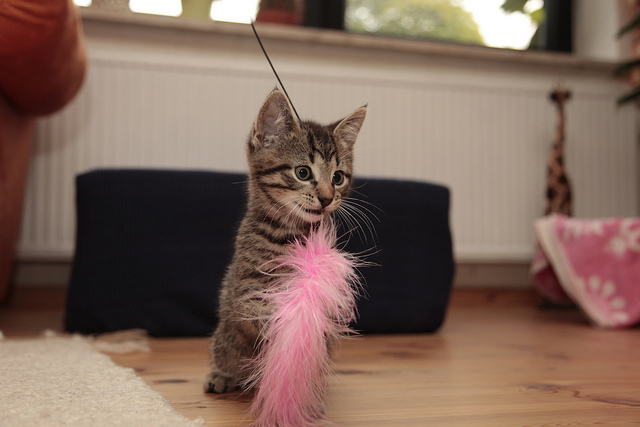 Moritz with feather