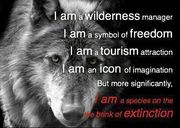 Unknown quote - Wolves