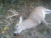 Deer Hunting 51