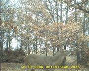 Deer Hunting 57