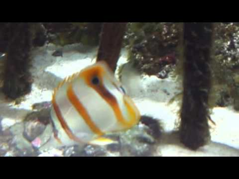 Aquarium Fish Videos For Kids
