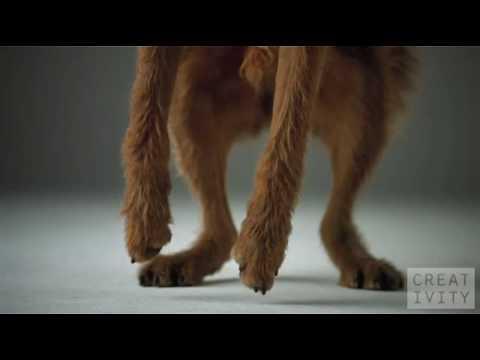 Um lindo comercial com cachorros