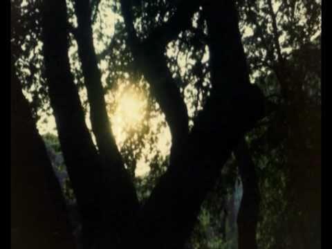 Δενδροβάτης - It climbs up trees