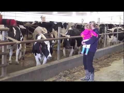 Meet Grenkow Dairy